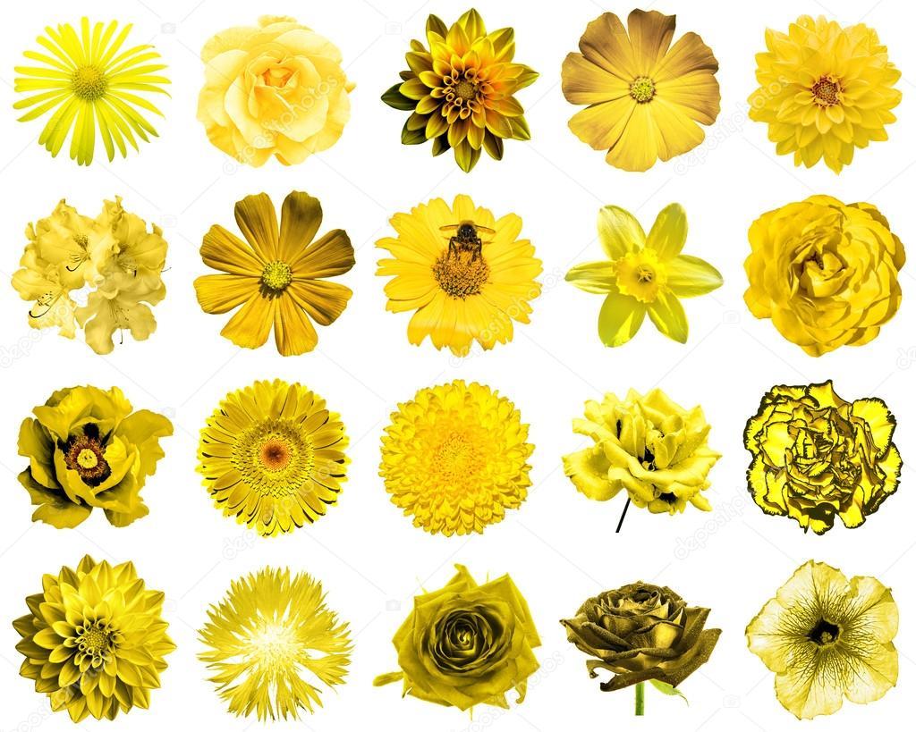 le collage de fleurs jaunes naturels et surréalistes 20 en 1
