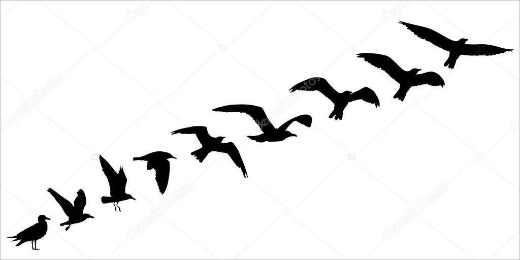 Stormo di uccelli su vercelli trailer del film - 3 part 3