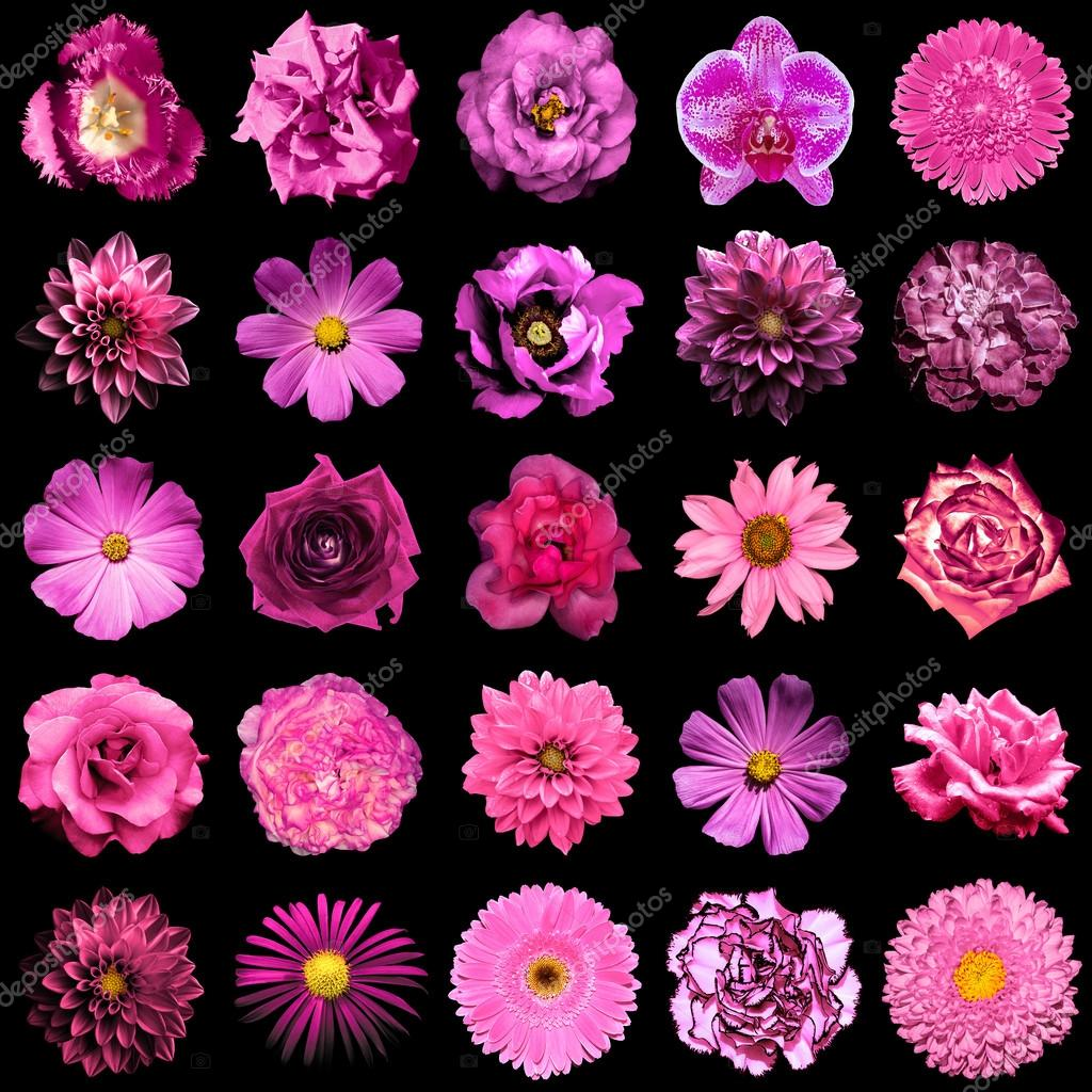 Collage Of Natural And Surreal Pink Flowers 25 In 1 Peony Dahlia