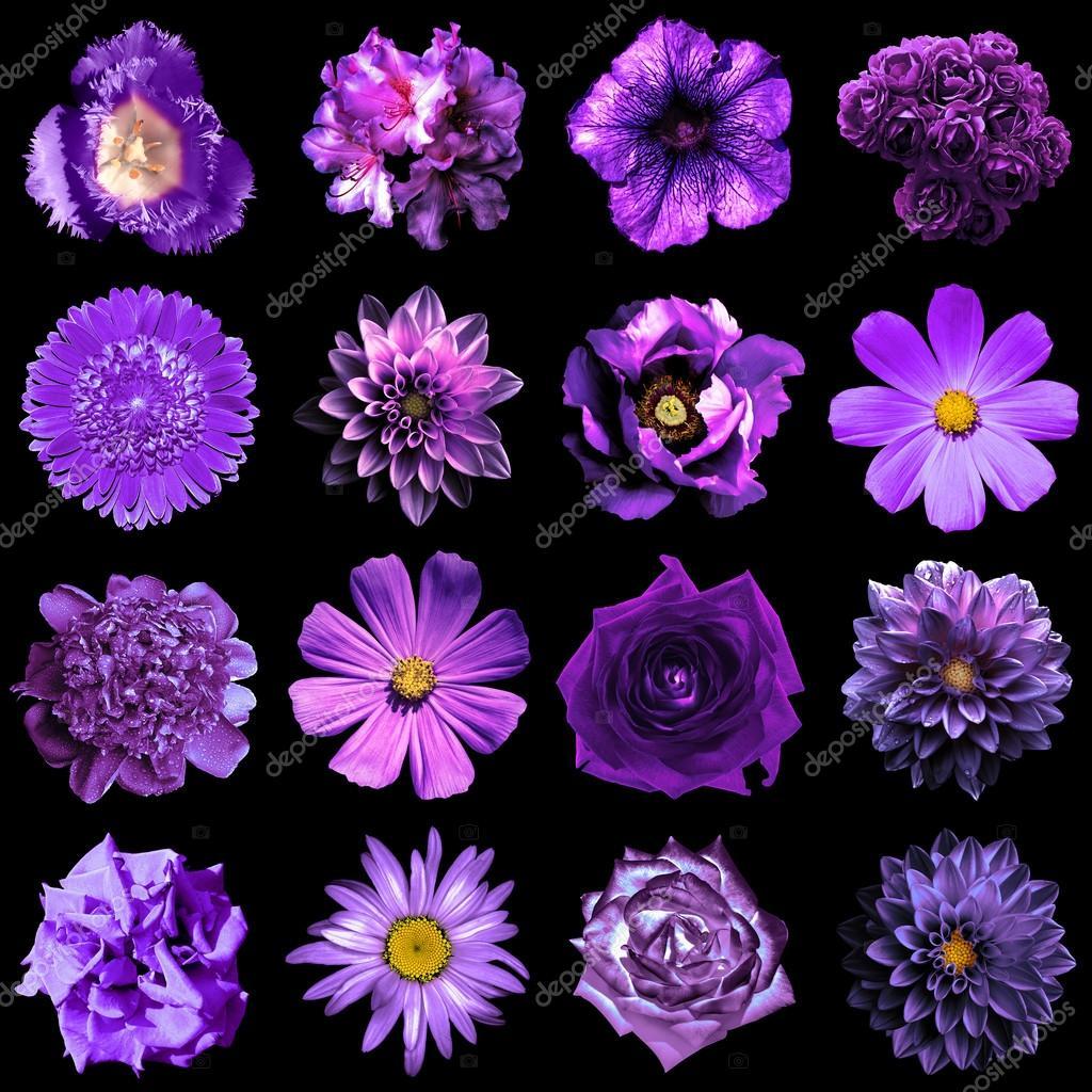 de naturel et surréaliste violet fleurs 16 en 1 : pivoine, dahlia