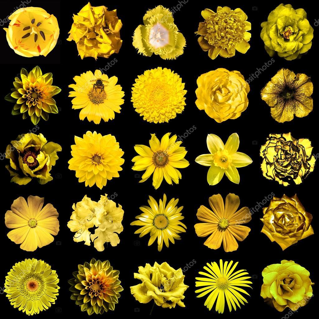 collage de naturel et surréaliste jaune fleurs 25 en 1 : pivoine