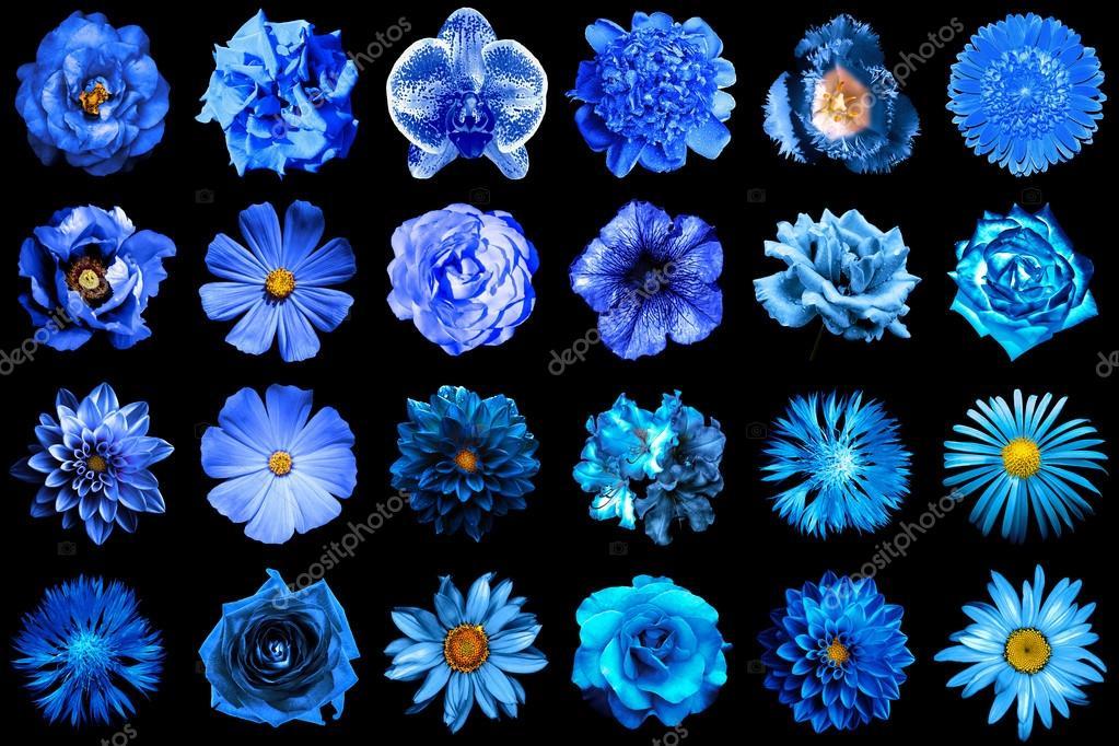 collage de naturel et surréaliste bleu fleurs 24 en 1 : pivoine