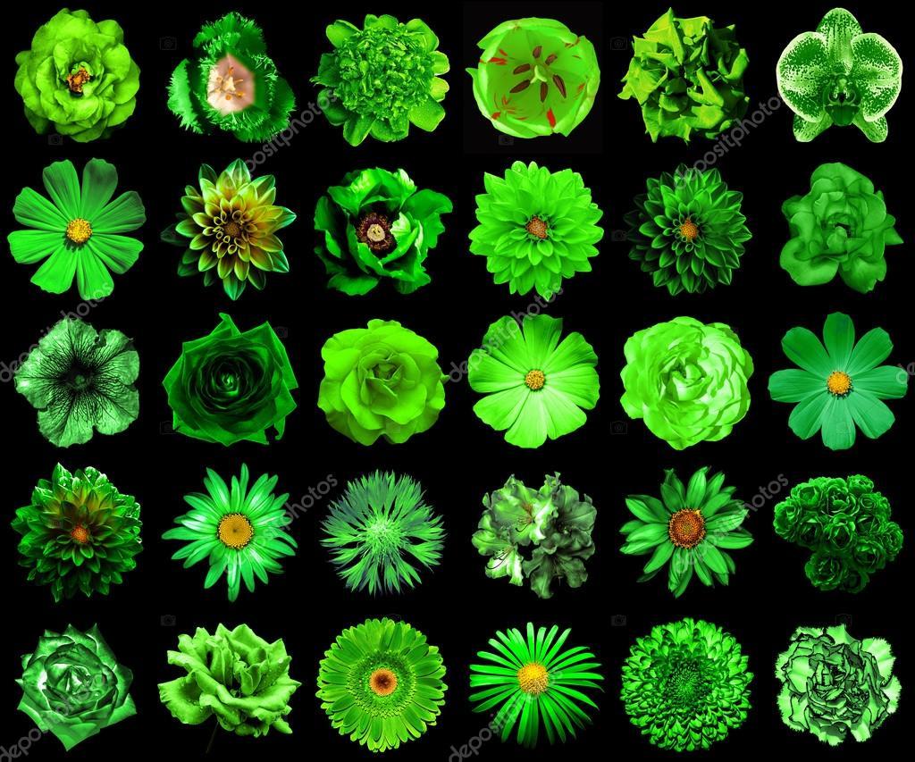de verdure naturel et surréaliste fleurs 30 en 1 : pivoine, dahlia