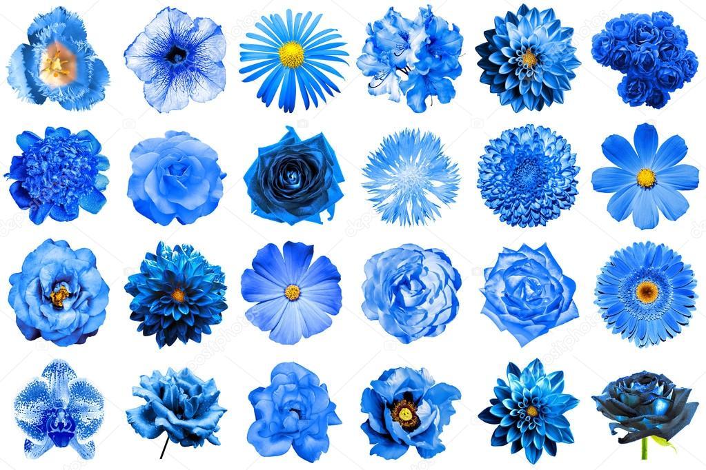 de naturel et surréaliste bleu fleurs 24 en 1 : pivoine, dahlia