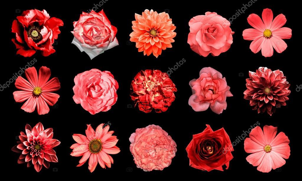 le collage de fleurs rouges naturels et surréalistes 15 en 1