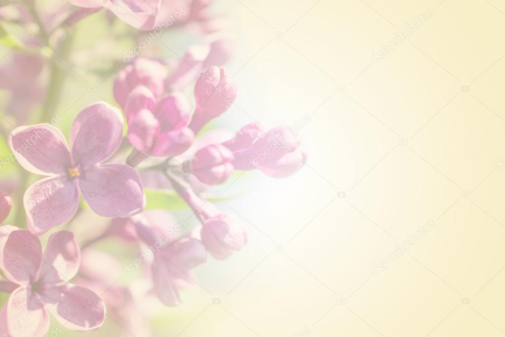 Branche De Petale De Couleur Douce Avec Ressort Rose Lilas Fleurs