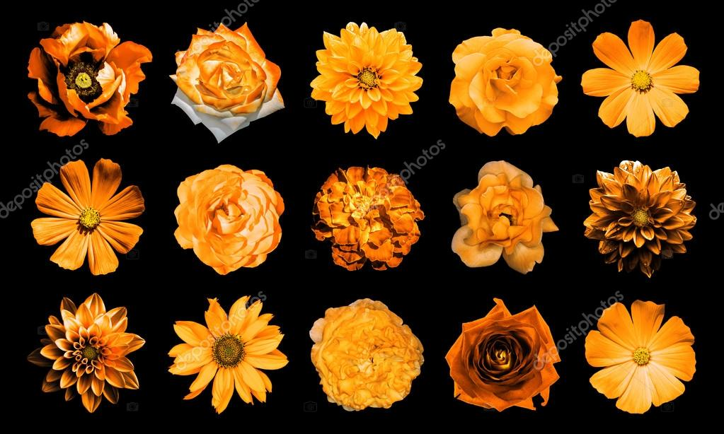 Mix Collage Of Natural And Surreal Orange Flowers 15 In 1 Dahlias
