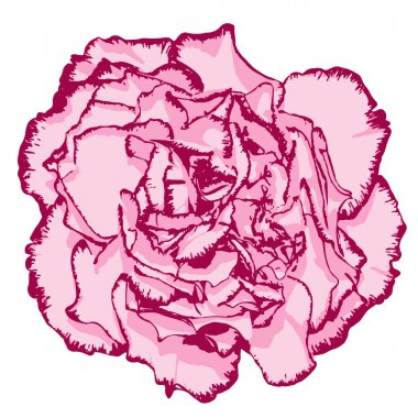 Clove flower with rose petals and pink edging. Vector illustration