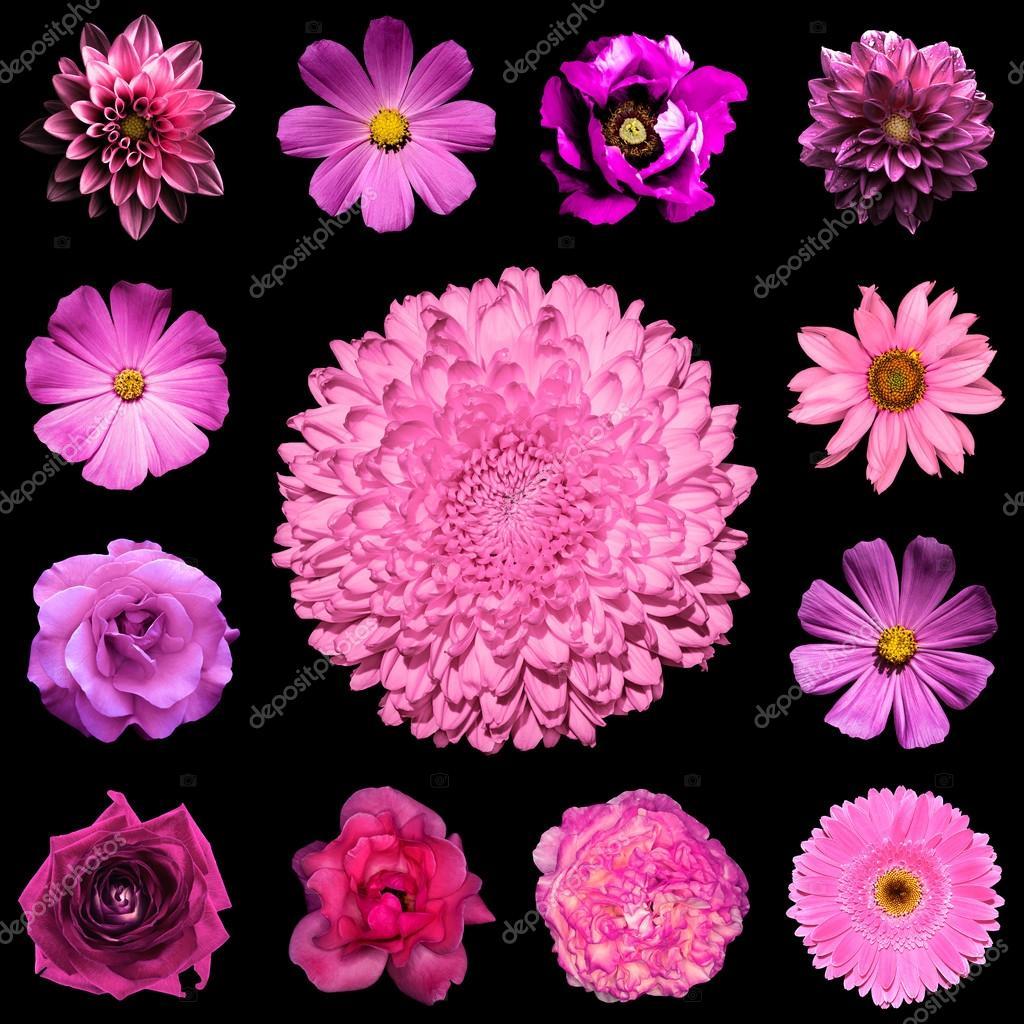 la place de collage mix style naturel et surréaliste rose fleurs