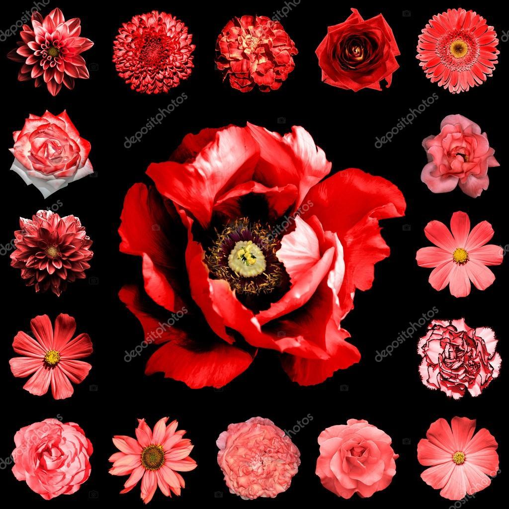 la place de collage mix style naturel et surréaliste rouge fleurs