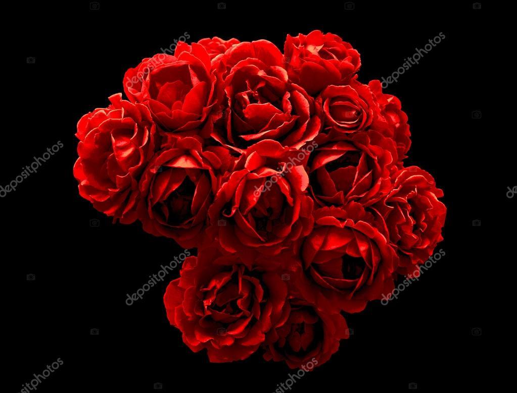 de chrome foncé surréaliste de macro de fleurs rose rouge isolé