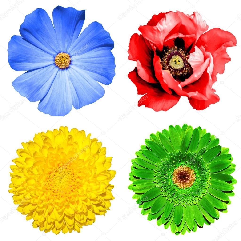 Ensemble De Fleurs 4 En 1 Jaune Chrysantheme Gerbera Vert