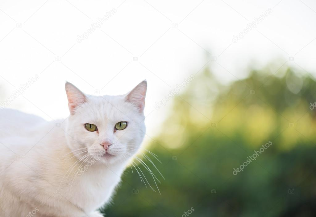 Wei 223 E Katze Mit Gr 252 Nen Augen Stockfoto 169 Frimufilms