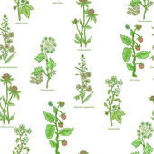 Medical herbs and plants seamless pattern