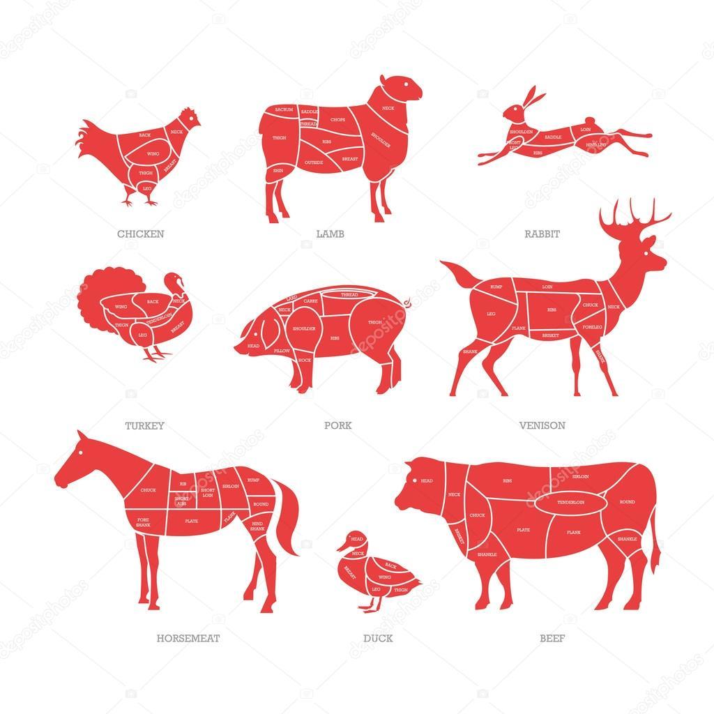 Butcher Shop Concept Vector Illustration Meat Cuts Animal Parts