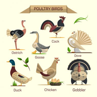 Farm birds vector set in flat style design. Poultry domestic animals icons collection. Goose, hen, duck, gobbler.