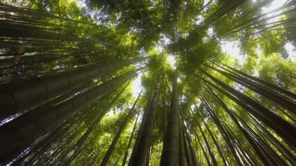 Vyhledat na bambusové stromy