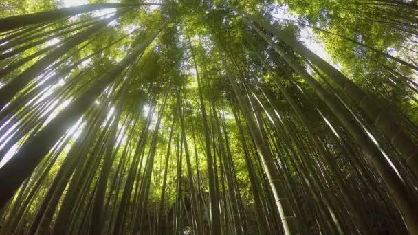 Vítr fouká koryta bambusové stromy