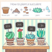 Photo Cactus and succulents sale banner