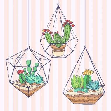 Cactus and succulent set