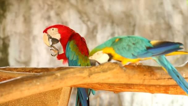 Macaw  bird  in chiangmai Thailand.
