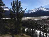 Scénický pohled na Icefield Parkway za slunečného dne
