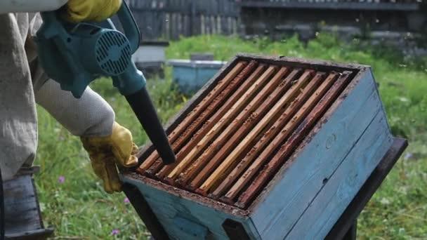 Imker benutzt Luftblasgerät, um Bienen beiseite zu wischen. Bienen schwärmen im Sammelbehälter.