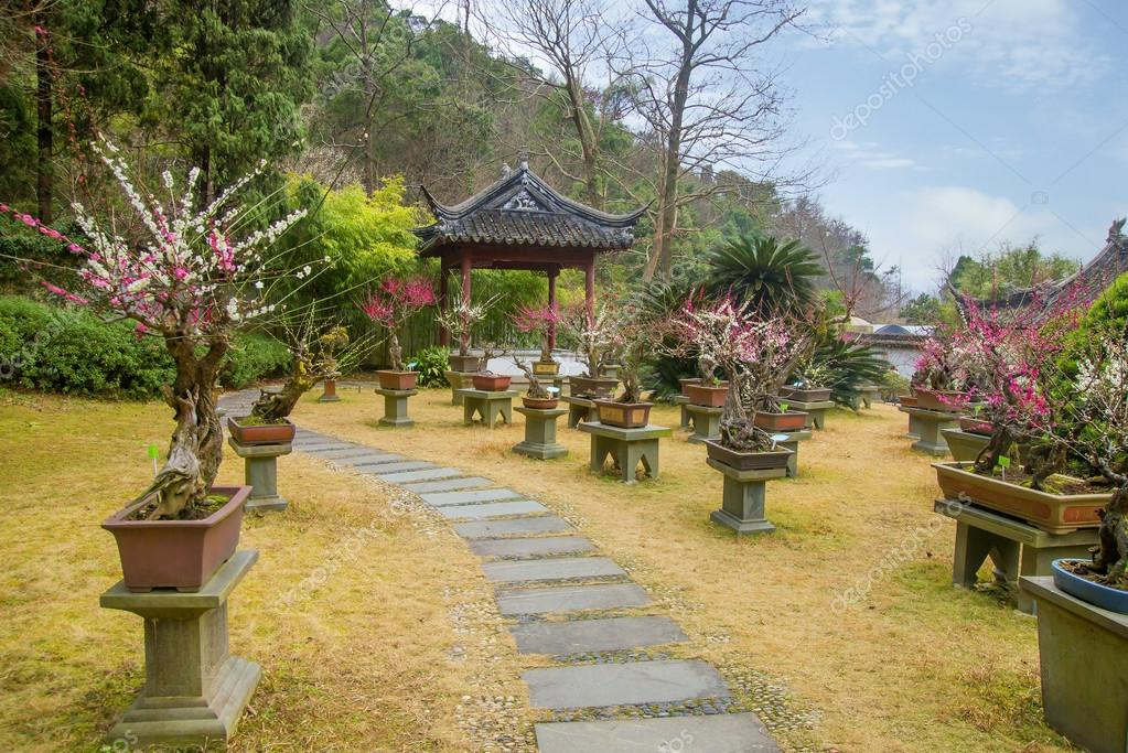 Bonsai y jardines chinos Fotos de Stock liushengfilm 71870087