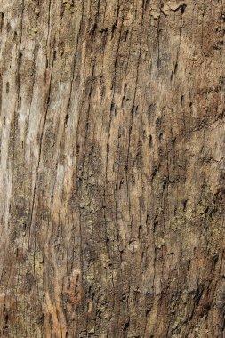 Cracked wood background
