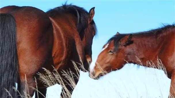 Dva koně Touch a komunikovat na horské pastviny