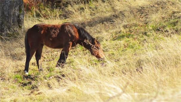 Koně, hříbě pasoucí se na horských pastvinách