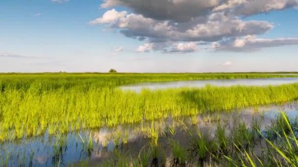 Vznik a pohyb mraků nad letní nekonečné zelené pole trávy v stepi Don.