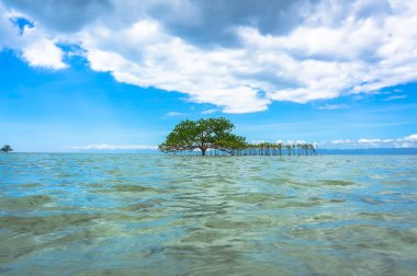 tree in crystal clear waters