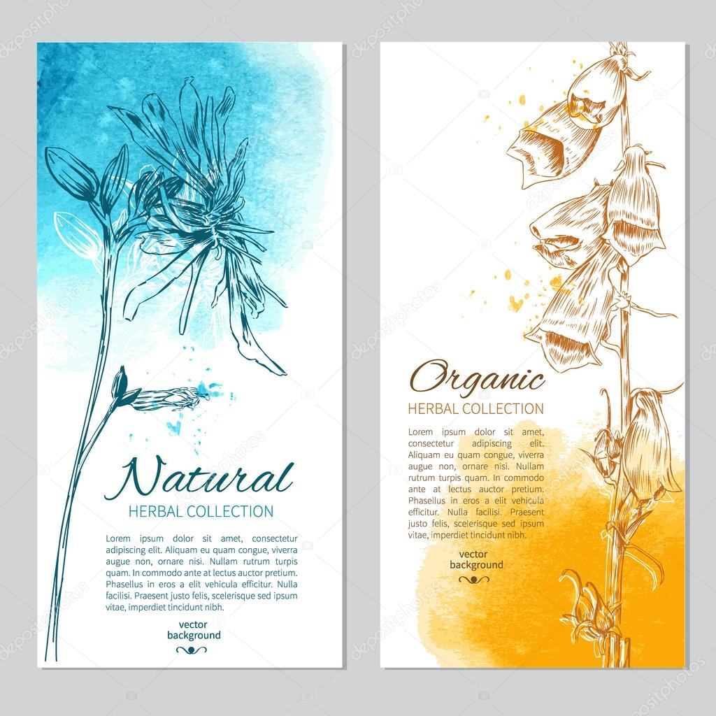 Set of 2 cards with hand drawn flowers and leaves, Vector illustration isolated on white, Designed frame with space for text