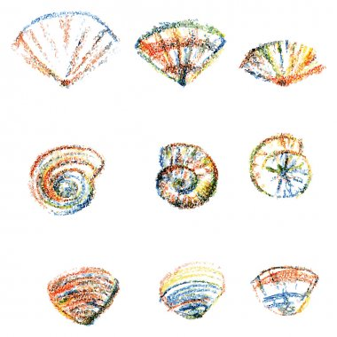 Set of color seashells isolated on white background, Vector illustration for you design, scrapbooking, web