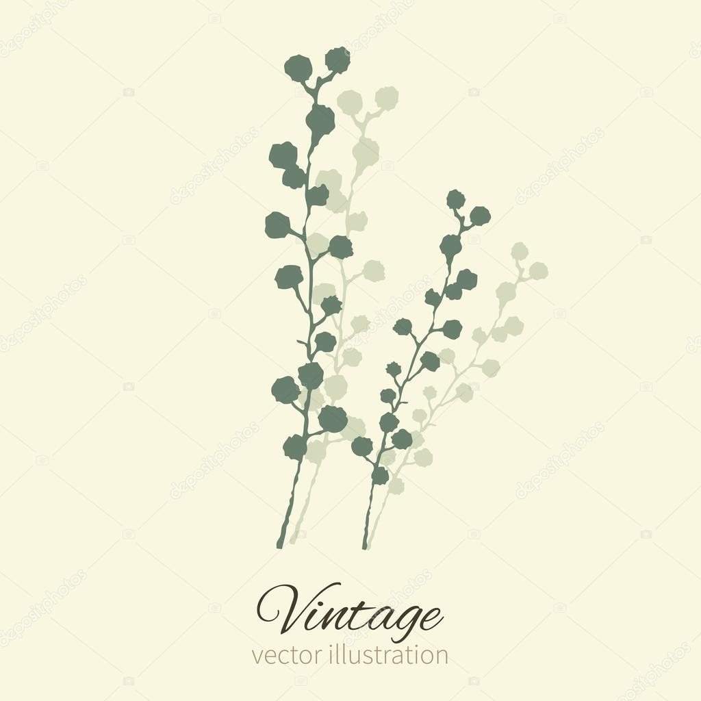 Mimosa flower isolated on background. Vector illustration.