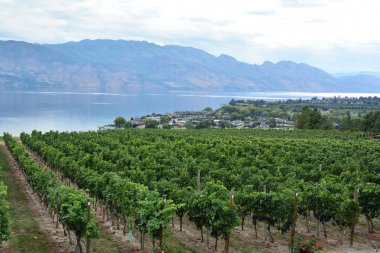 Rows of grape vines and an awesome view of the Okanagan Valley