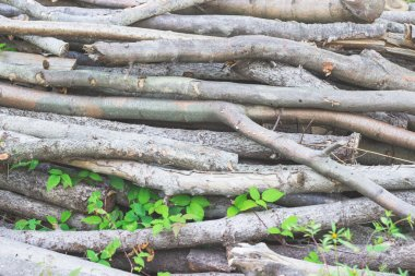 Pile of cut twigs background