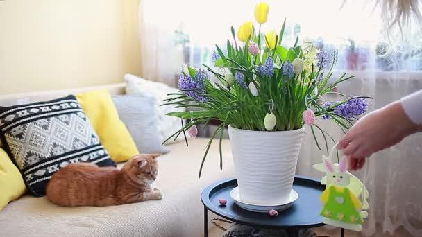 Výzdoba velikonočního domu. Žena zdobí jarní kvetoucí květiny v květináči s vejci. Žluté hyacinty, tulipány, muškátové květy rostou na stole po králíčkovi.