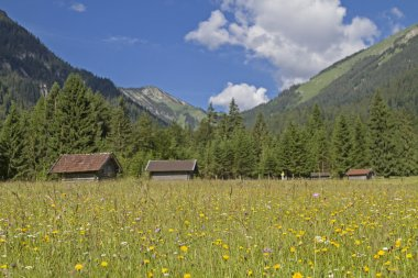 Mountain meadow with hay huts