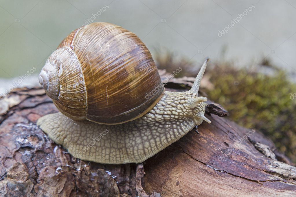 Snail on a  tree trunk