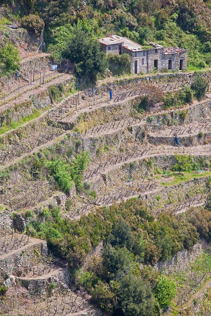 coltivazione a terrazza — Foto Stock © Tinieder #72077221