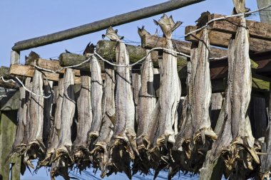 Stockfish on racks