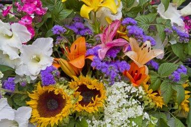 Wallpaper - colorful garden flowers