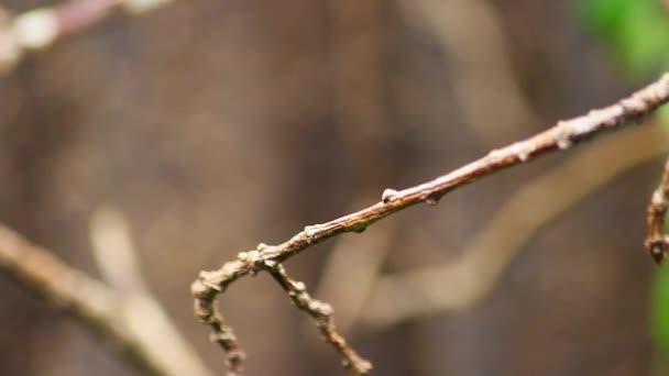 Krásný létající Colibri