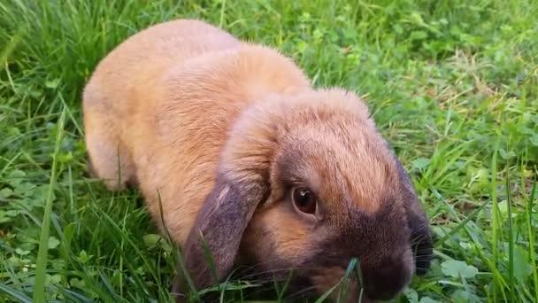 Roztomilý králík jíst trávu