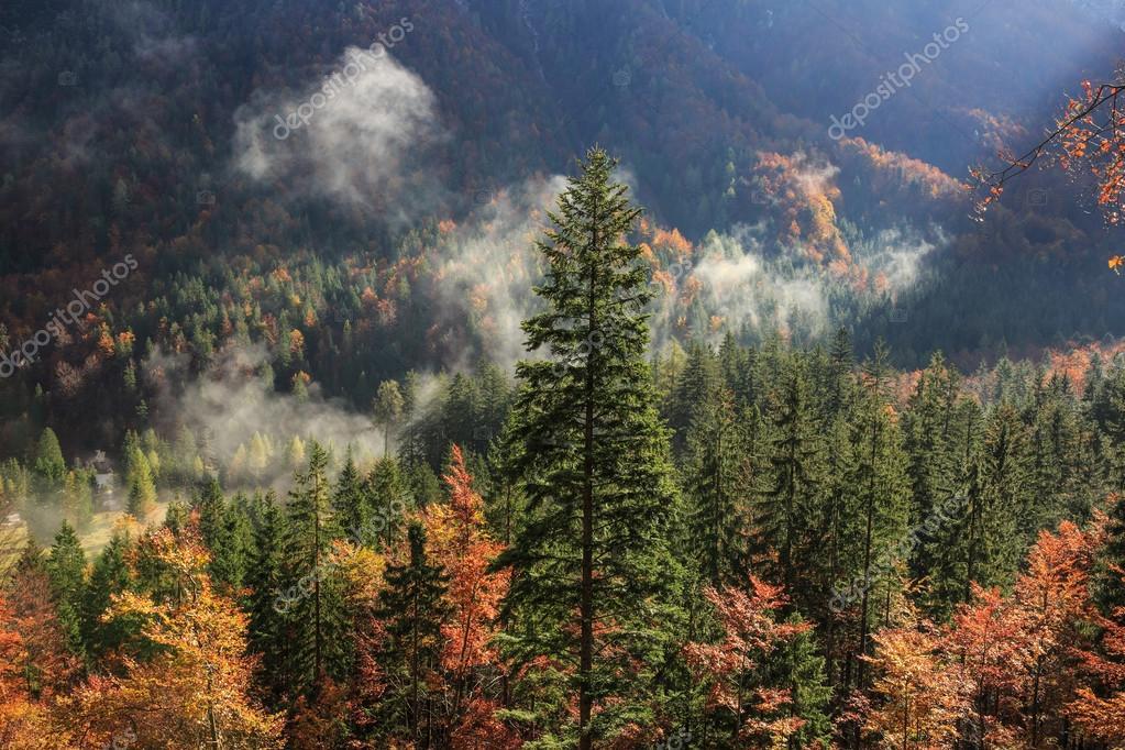 Fotografie: delle latifoglie | Foresta di conifere e