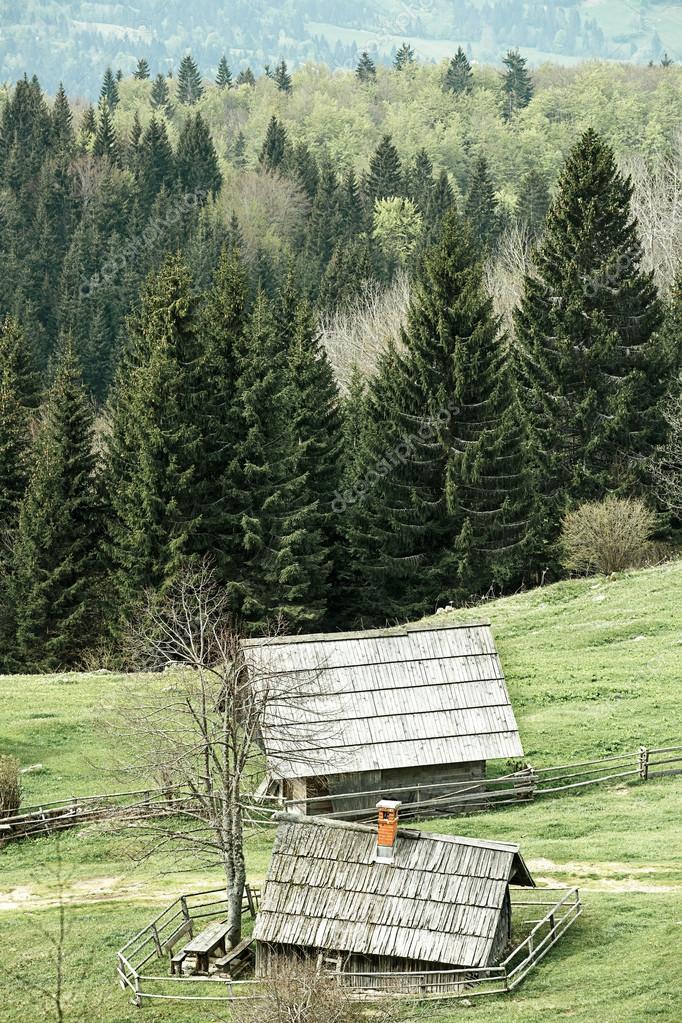 Idyllic dairy farms on alpine meadow