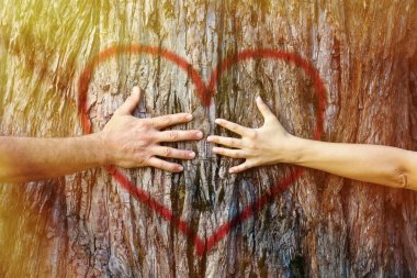 Hands of couple in love hugging a tree with painted red heart with yellow and golden sunlight stock vector
