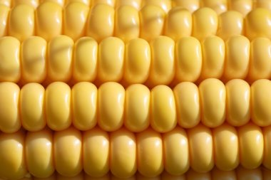 Closeup of yellow corn kernels, set in neat rows